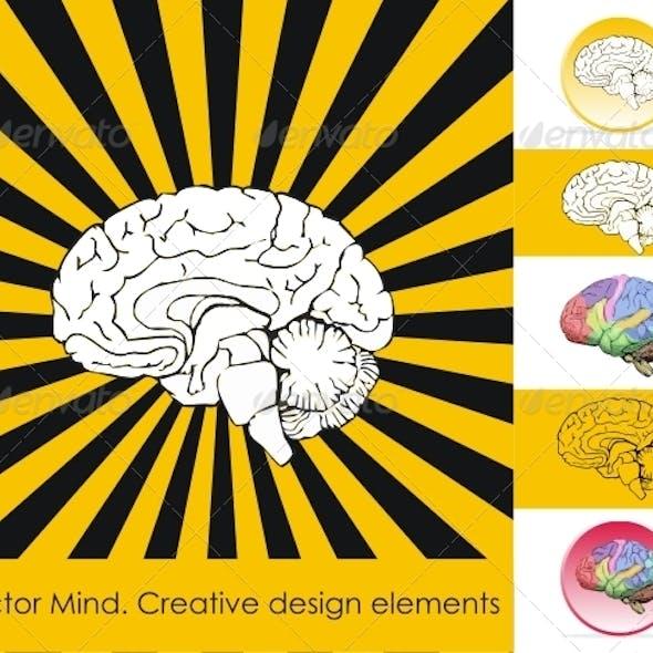 Human brain. Creative design elements.