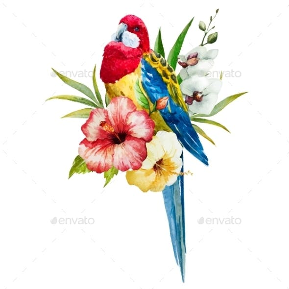 Watercolor Rosella Bird