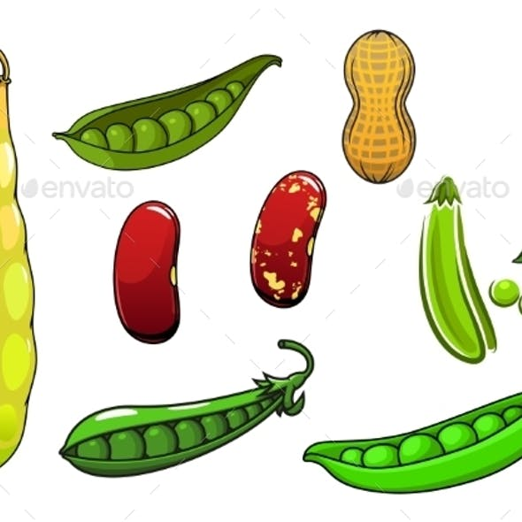 Cartoon Fresh Legumes And Vegetables