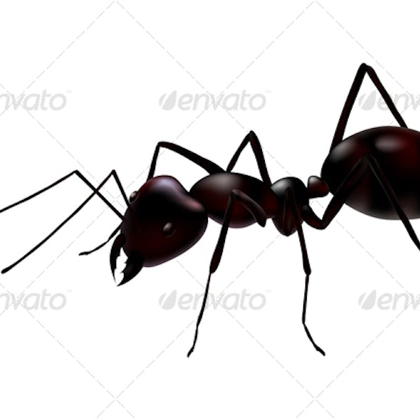 vector ant