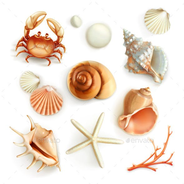 Seashells Illustration Icons