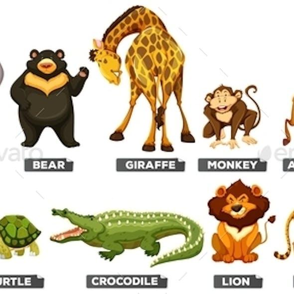 Wild Animals in Many Types