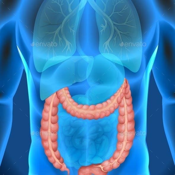 Xray of Human's Large Intestine