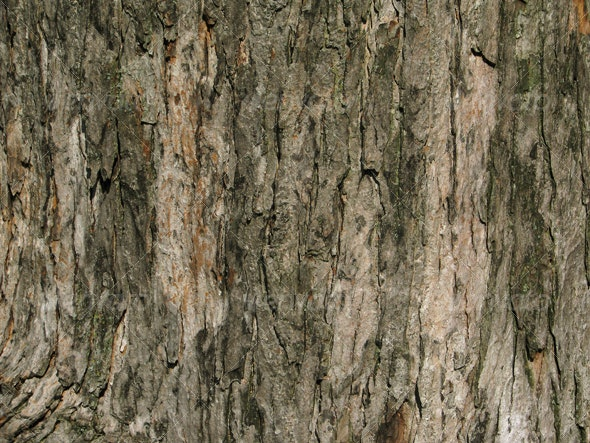 :: Wood 8 - Wood Textures
