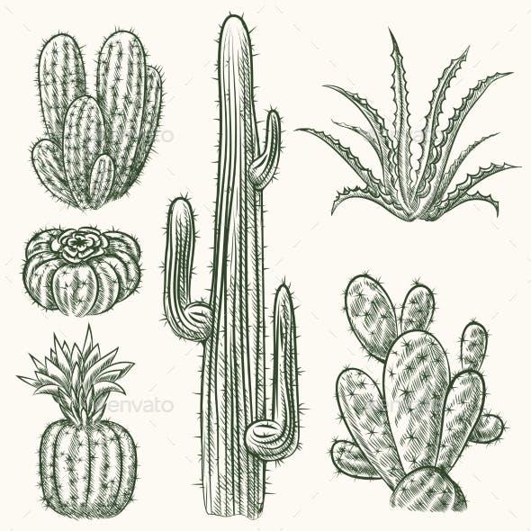 Hand Drawn Vector Cactus