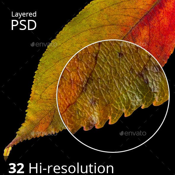 32 hi-res Isolated autumn leaves PSD