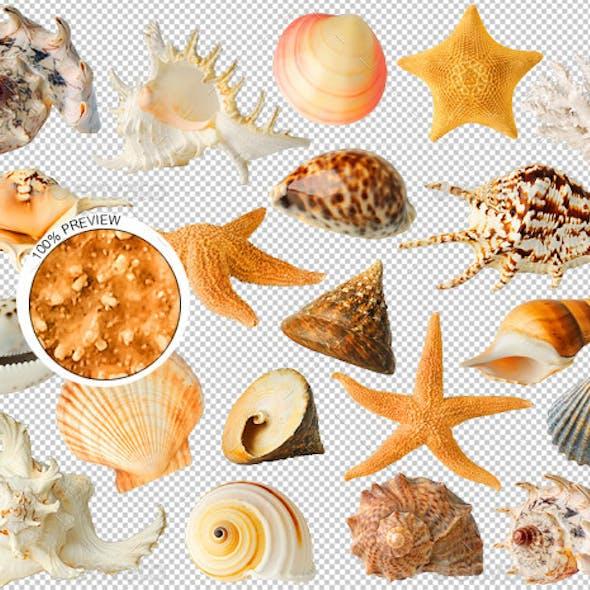 20 Sea Shells