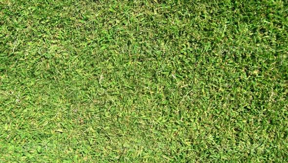 Grass Texture - Nature Textures
