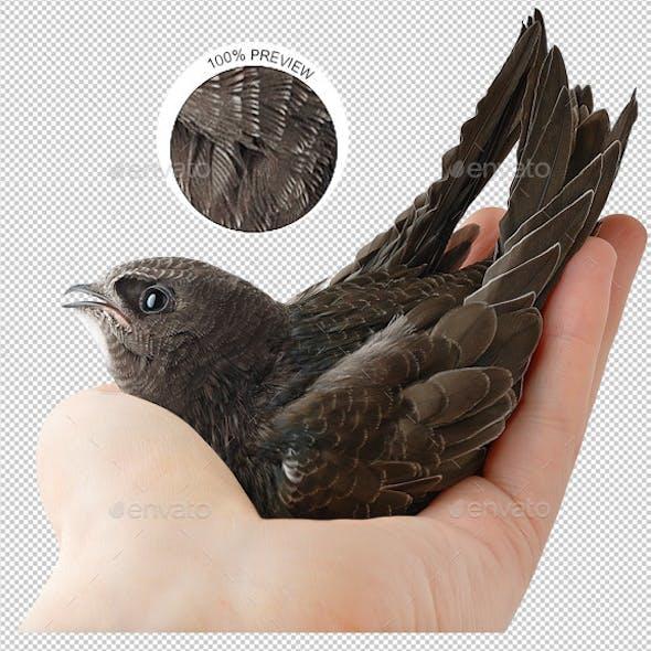 Bird in Human Hand