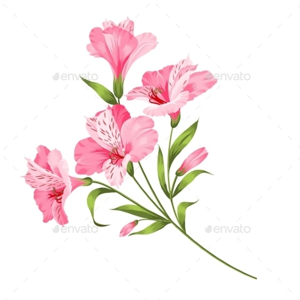 Alstromeria Branch Isolated on White - Flowers & Plants Nature