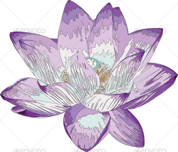Purple Lotus Flower - Flowers & Plants Nature