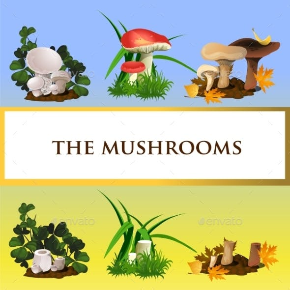 Icons Of Wild Mushrooms And Their Growth