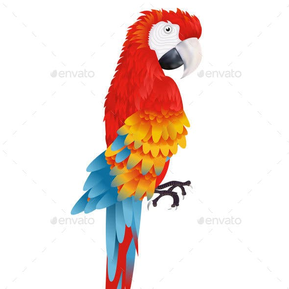 A Bright Macaw Parrot