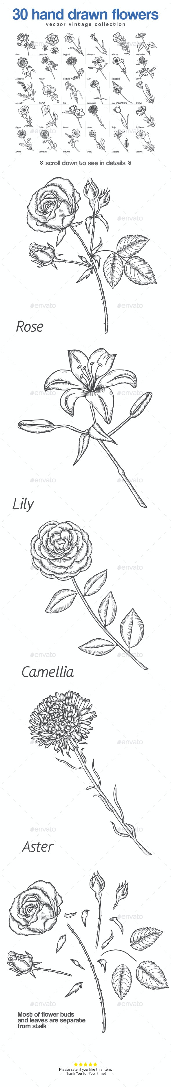 30 Hand Drawn Flowers - Flowers & Plants Nature
