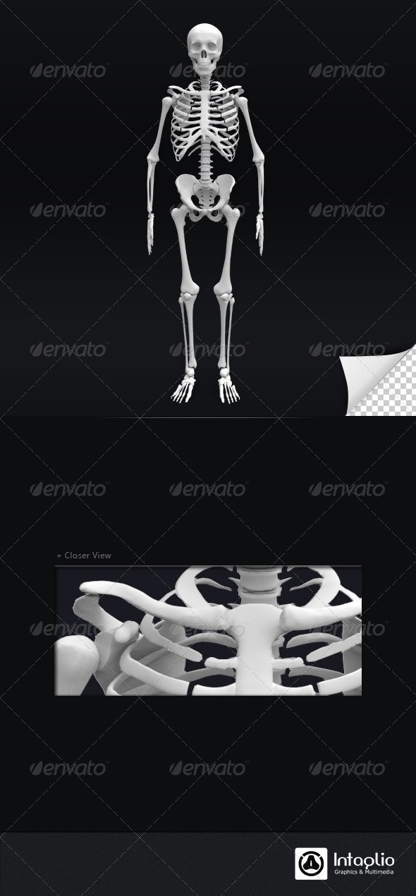 Skeleton 3D Render - Characters 3D Renders
