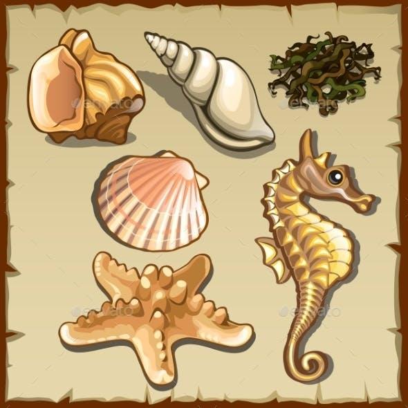 Decor of Seashells and Seaweed