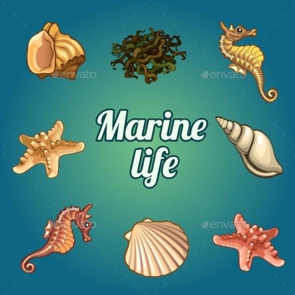 Set Of Seven Shells And Sea Inhabitants