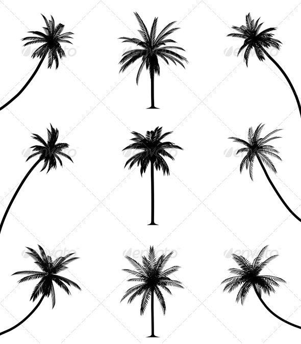 Palm trees - Flowers & Plants Nature