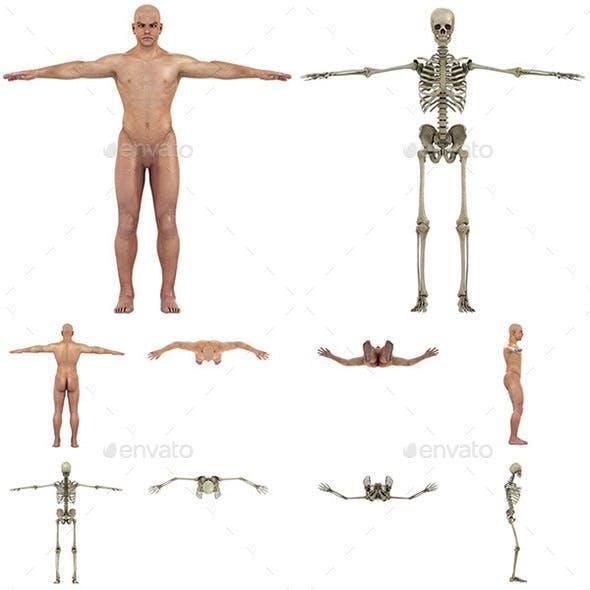 Human Body - Skeleton