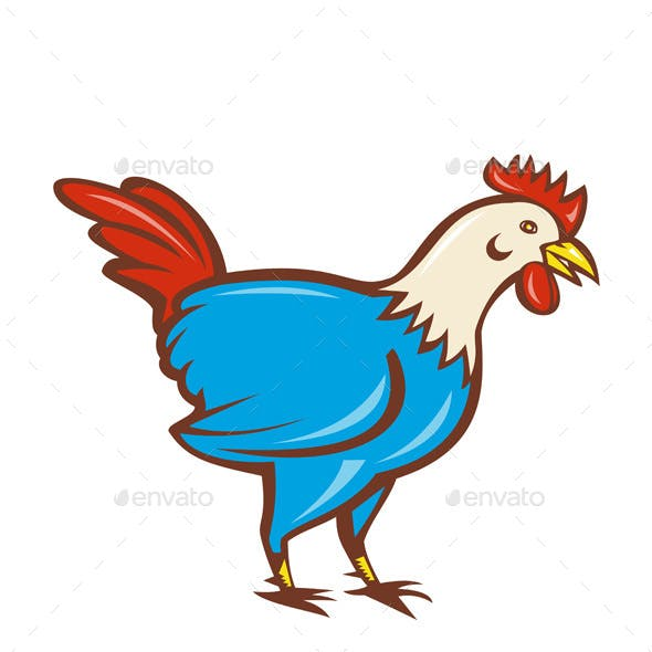 Chicken Rooster Side Cartoon