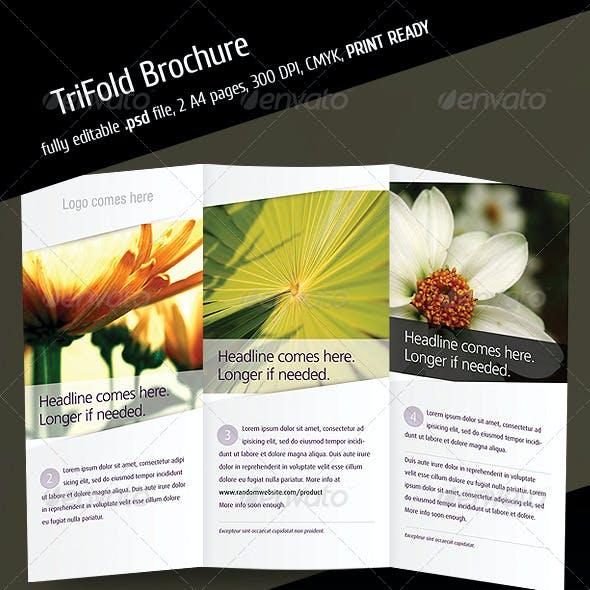 Tri Fold Brochure V3
