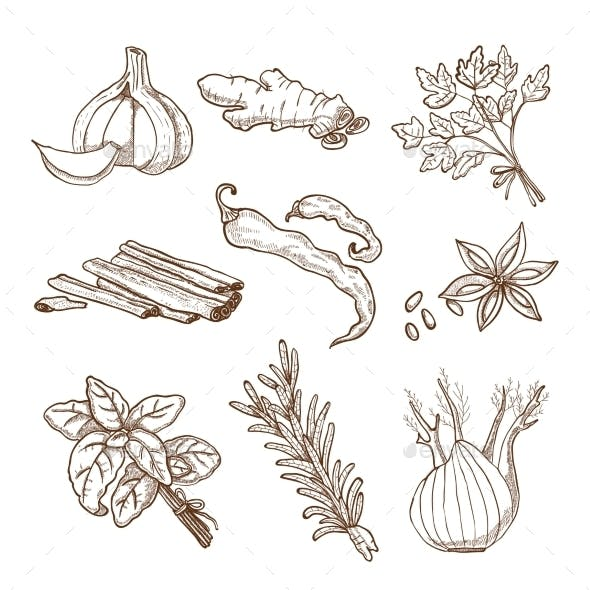 Hand Drawn Herbs and Spices Set