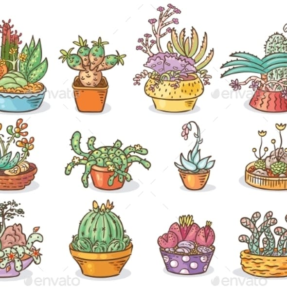 Set Of Succulent Compositions In Containers