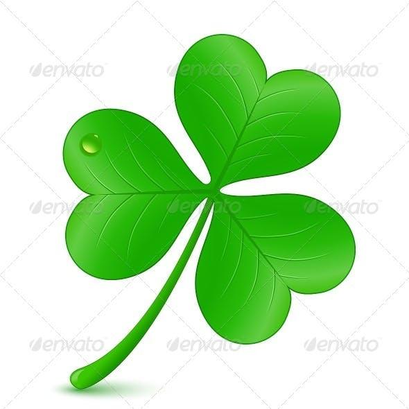 Illustration of Clover. St. Patrick's Day Symbol