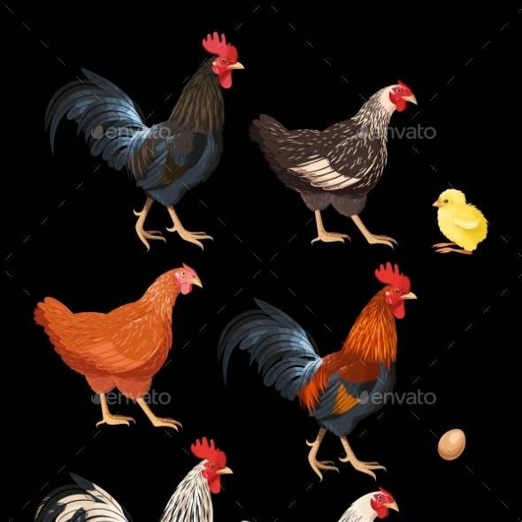 Set Of Chicken