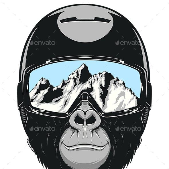Monkey Wearing a Helmet