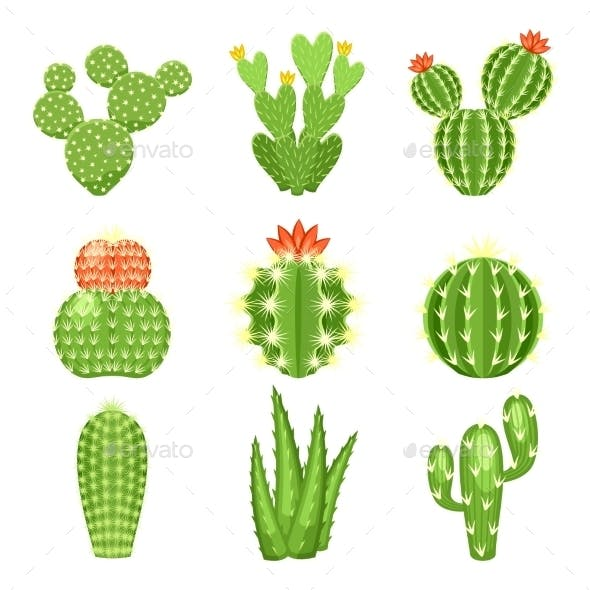 Set of Colored Cactus and Succulents