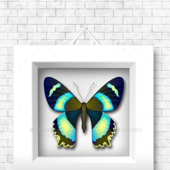 Vector Butterfly In a White Frame On a Brick Wall