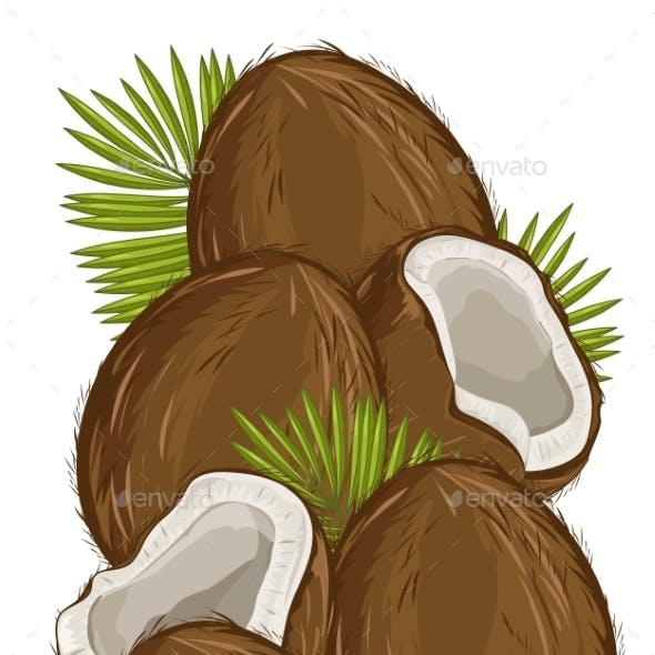 Coconut Isolated, Vector, Nut Composition.