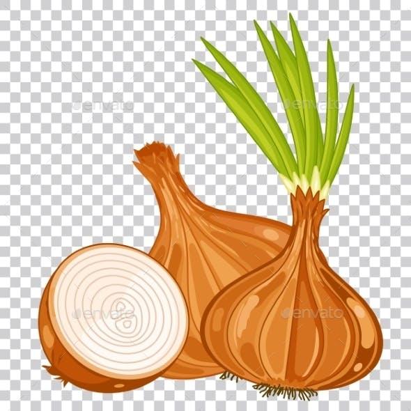 Onion Isolated Organic Food