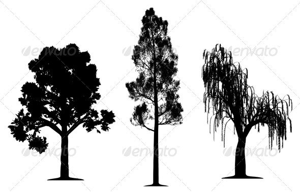 Oak, forest pine and weeping willow tree - Flowers & Plants Nature