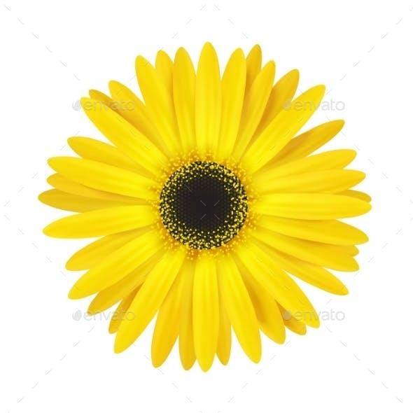 Bright Spring Flower