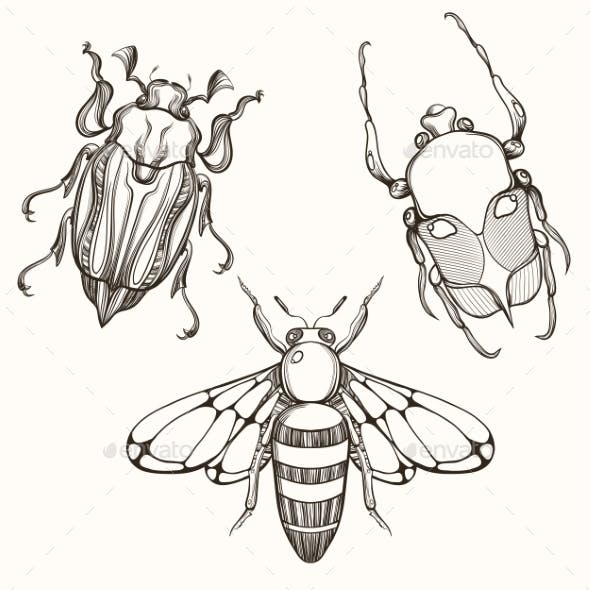 Hand Drawn Engraving Sketch of Scarab Beetle