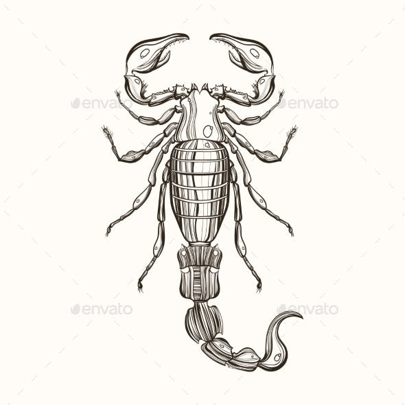 Hand Drawn Engraving Sketch Of Scorpion. Vector