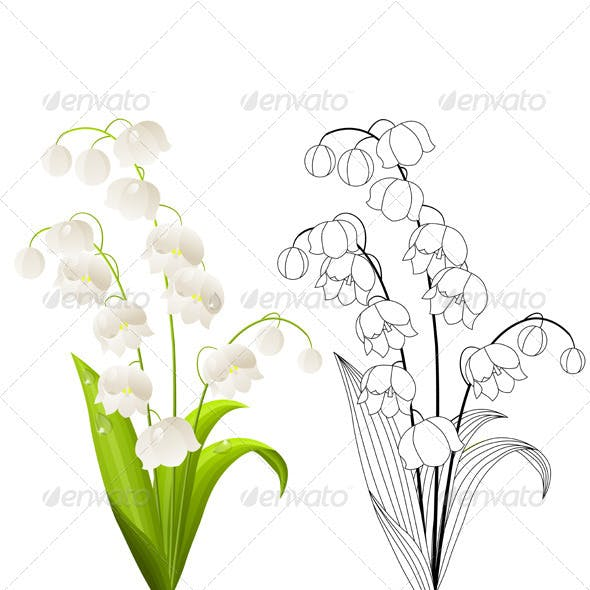 Vector Lily of the Valley Isolated on White.