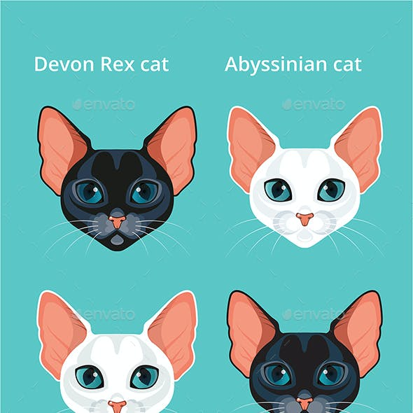 Set Black and White Abyssinian Cat and Devon Rex Cat