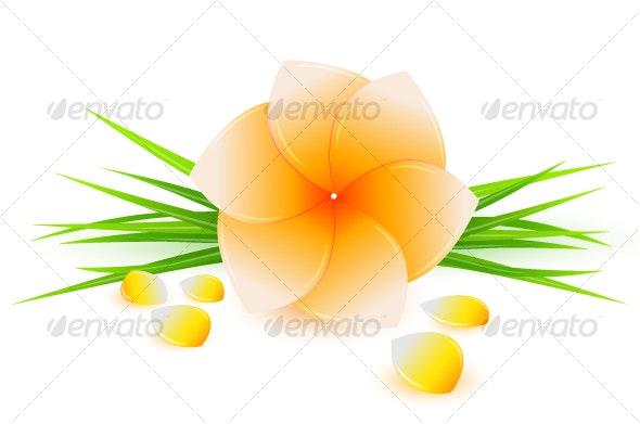 Spa flower - Flowers & Plants Nature