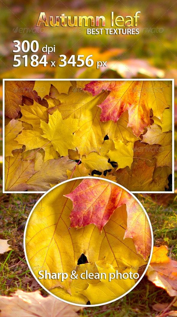 Autumn leaf - Nature Textures