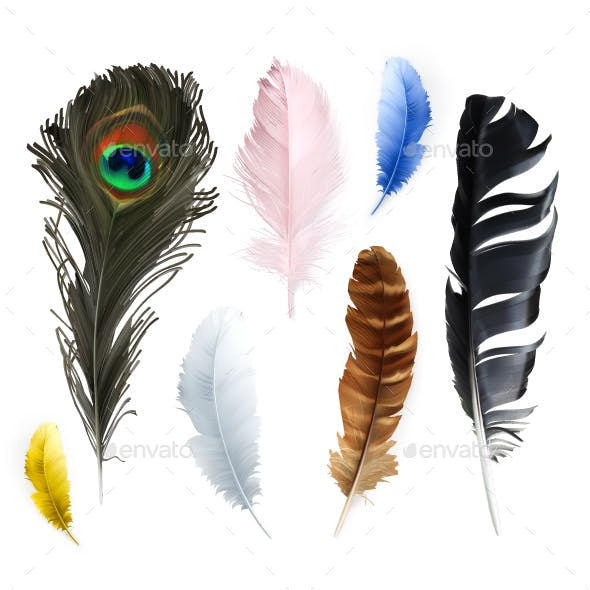 Feathers Vector Icons