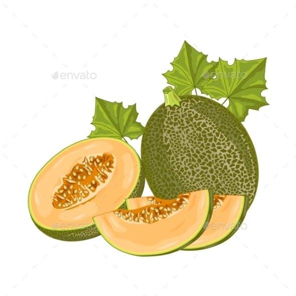 Melon Fruit On White Background.