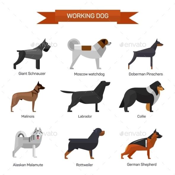 Dog Breeds Set Isolated on White Background - Animals Characters