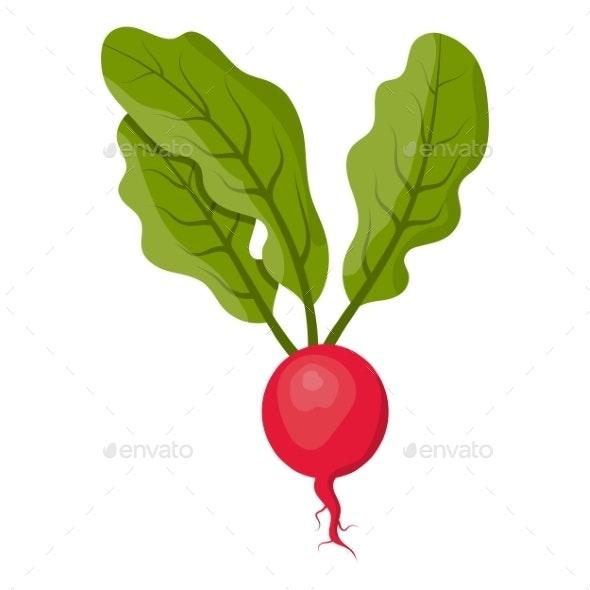 Radish - Food Objects