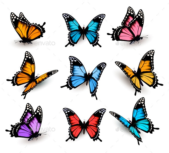 Big Collection Of Colorful Butterflies Vector - Animals Characters