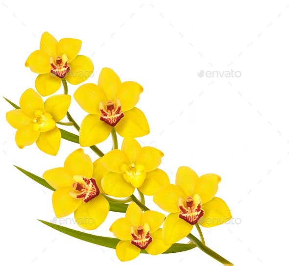 Holiday Yellow Flowers Background - Flowers & Plants Nature