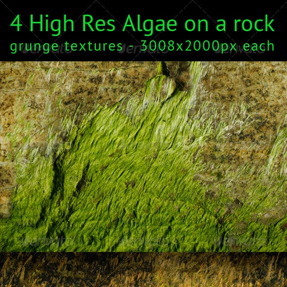 Algae on a rock texture pack