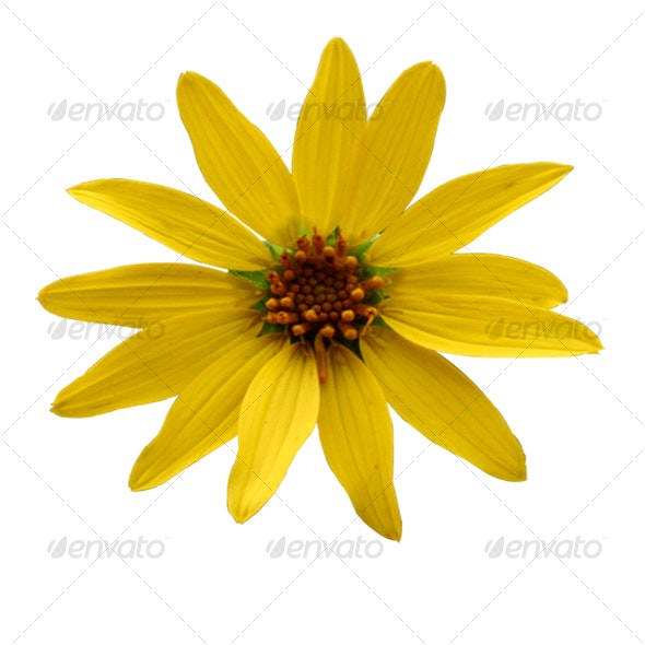 Yellow Flower - Nature & Animals Isolated Objects